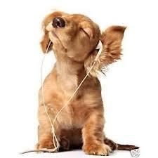 cãozinho com audiophones